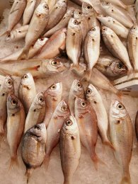 złowione ryby
