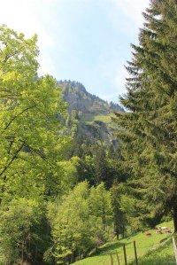 górskie drzewa