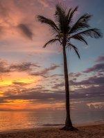 palma na Karaibach